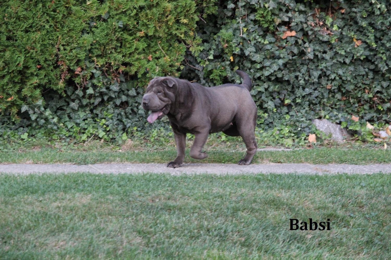 babsy-3
